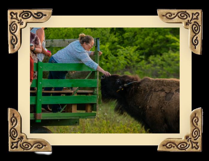 OWB_Gallery-buffalo img 4@2x