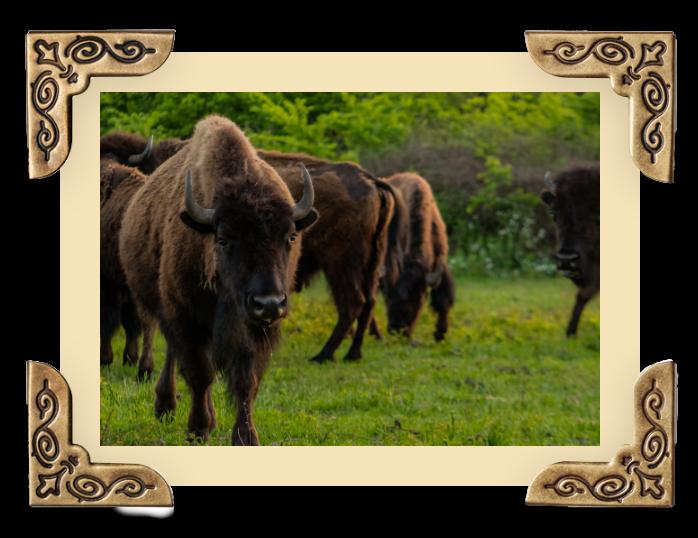 OWB_Gallery-buffalo img 5@2x