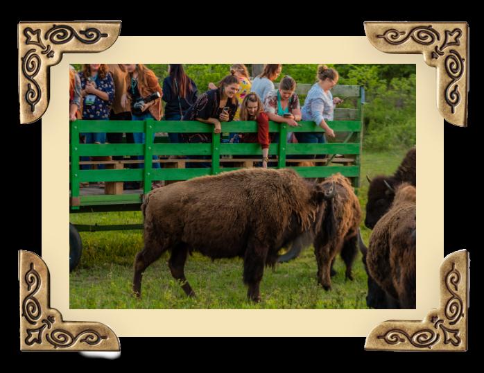 OWB_Gallery-buffalo img 8@2x