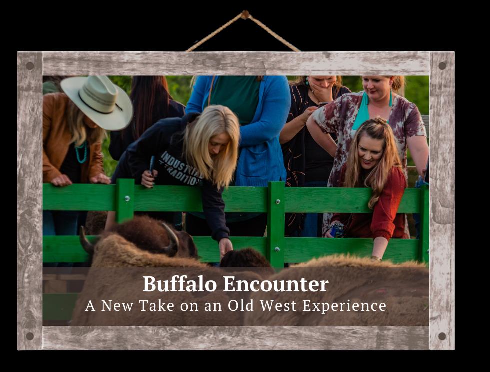 guests feeding buffalo old west buffalo